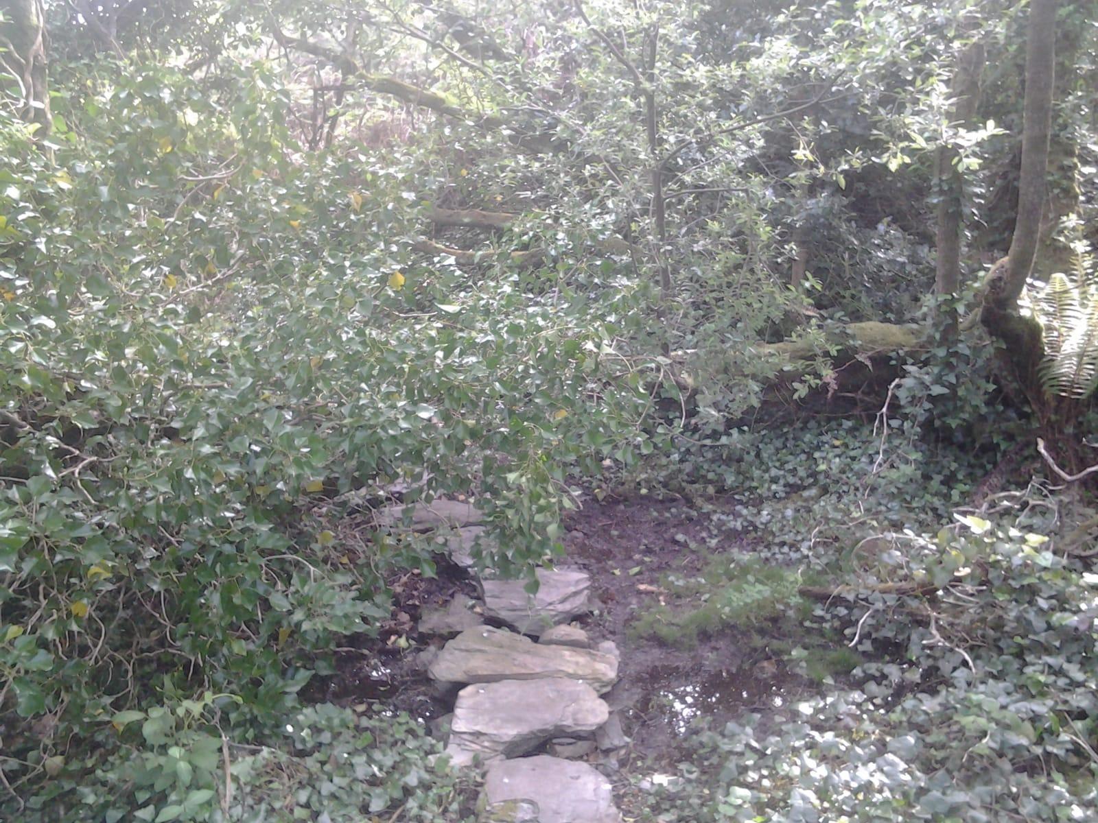 fallen willow